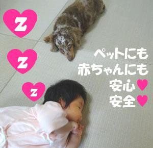 赤ちゃんやペットにも安心安全なタタミです。タタミショップしんこう